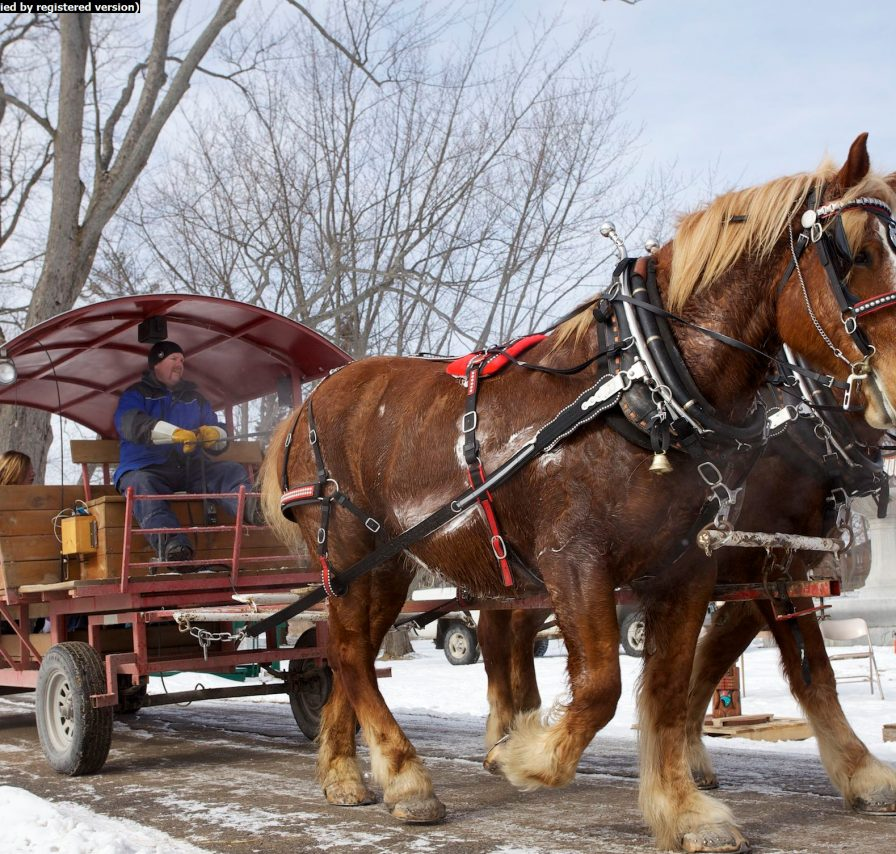 Ocala Winery - Wagon Rides